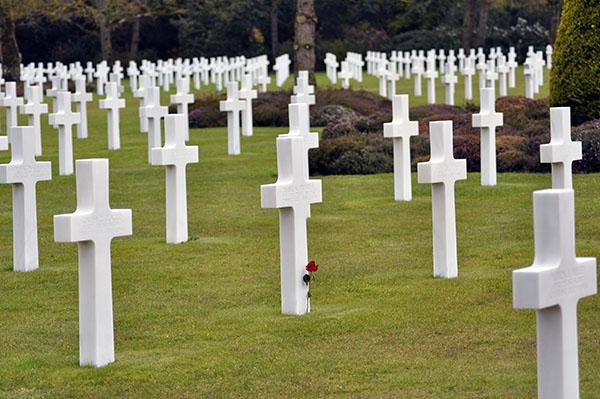 En ensam röd ros bland alla de vita korsen.